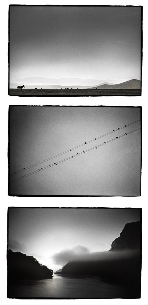 Zèbres, Hirondelles et Aube mer©Chapoullié